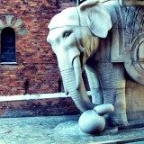 Stoned Elephant