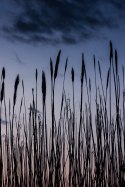 Lost in the Reeds