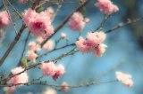 Spring Branching