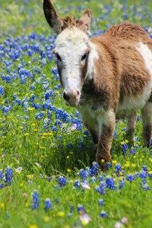 Mule - I