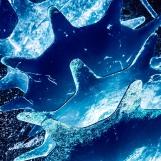 Blue Till