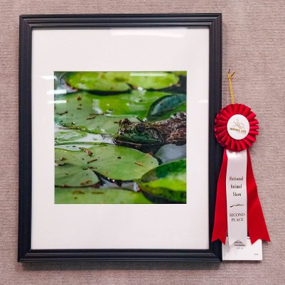 Second Place in the 2018 IAA Animal Art Competition & Exhibition.