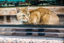 Bodega Cat in NYC's Little Italy